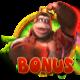 Bonus Scatter